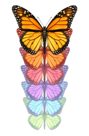 Spread your wings and escape with a monarch butterfly flying upward changing and going through a color transformation as a concept of freedom creativity and design innovation isolated on a white background.